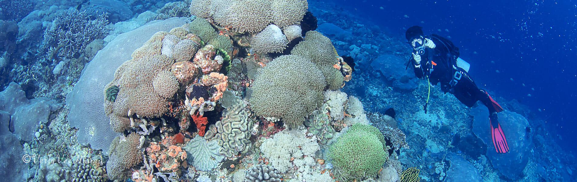 Diving in Nusa Penida Bali - Drift Diving Bali