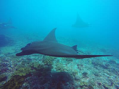 scuba diving nusa penida