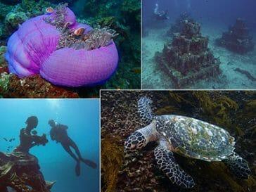 scuba diving amed
