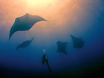 scuba diving lembongan