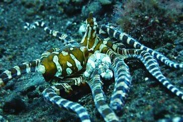 Muck-Dive-Bali