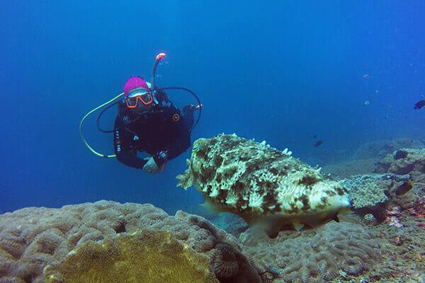 Padang Bay Dive Trip