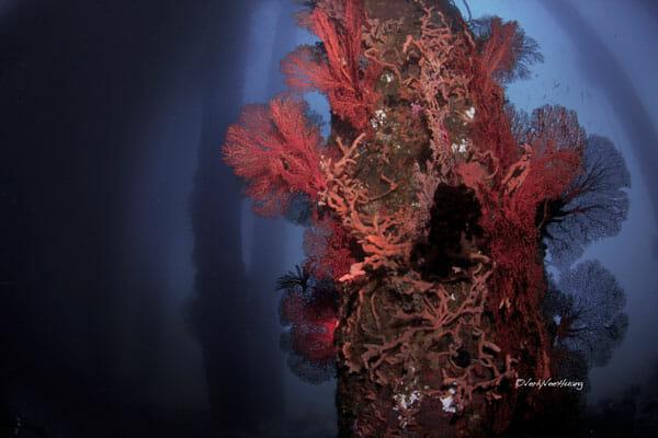 Scuba-Diving-in-bali-Padang-Bay