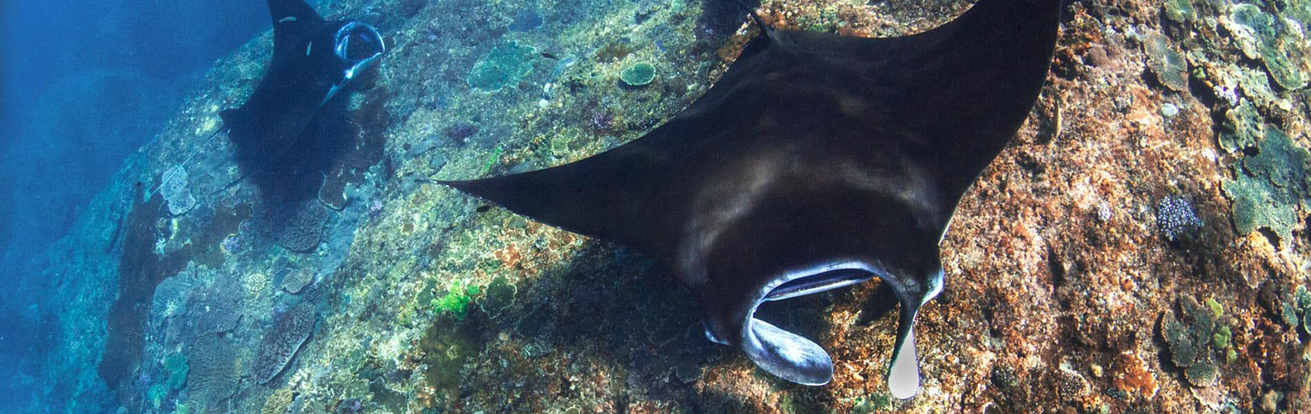 Manta Diving Bali Fun Diving