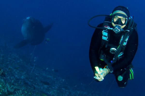 Mola Mola dive Bali, Diving Bali with Mola Mola