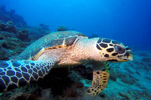 Bali Dive Site, Menjangan Island