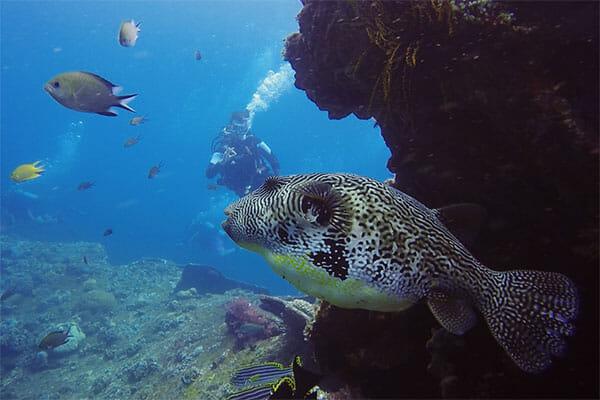 SSI dive course Bali