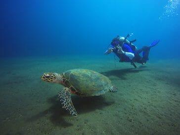 scuba diving padangbay