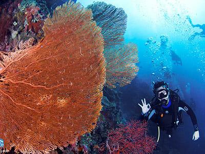 scuba diving bali