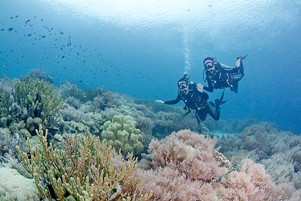 Bali Diving, Home
