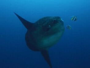 Mola Mola Pep Talk Part 2